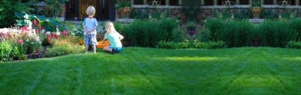Organic Lawn Care Charlotte