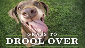 organic weed control for pets