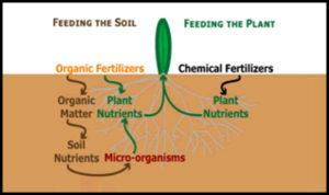 Windemere organic lawn fertilization